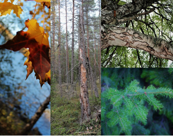 Vihreässä ympäristössä aistimme aktivoituvat ja ympärillä voi aistia luonnon voimaa.